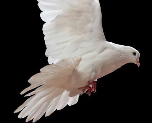pentecost-germany