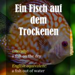 German Idioms – Part 2